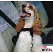 Cinturón para perros talla mediana